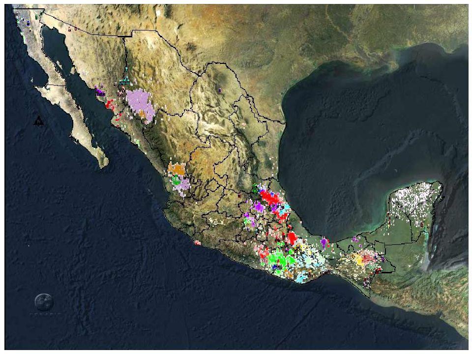 Actividades económicas ¿Cuáles son las principales características de los pueblos indígenas.