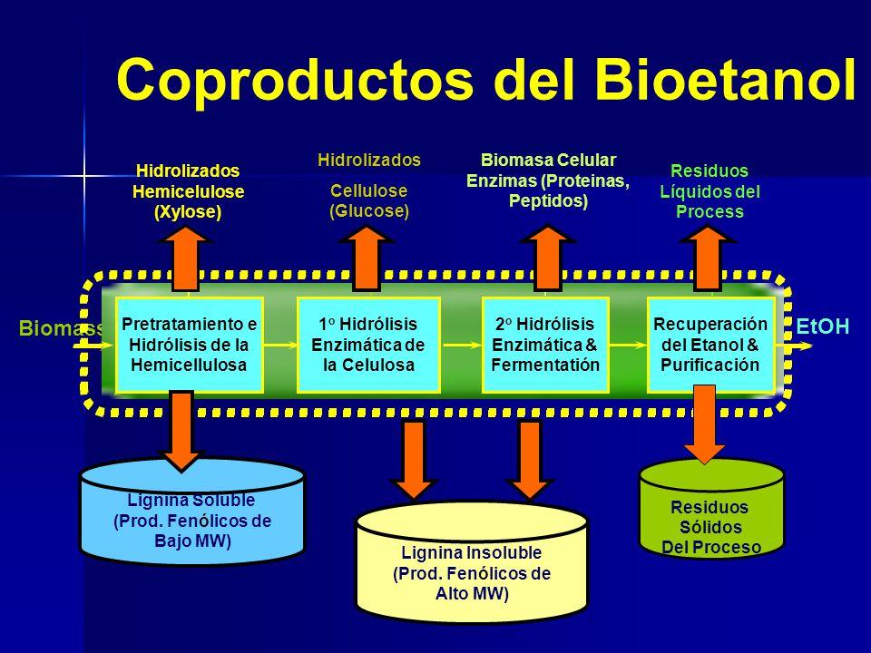 Coproductos del Bioetanol Hidrolizados Hemicelulose (Xylose) Hidrolizados Cellulose (Glucose) 1 o Hidrólisis Enzimática de la Celulosa Pretratamiento