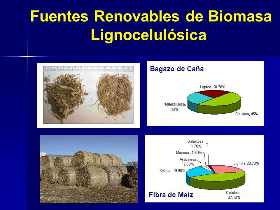Fibra de Maíz Bagazo de Caña Fuentes Renovables de Biomasa Lignocelulósica