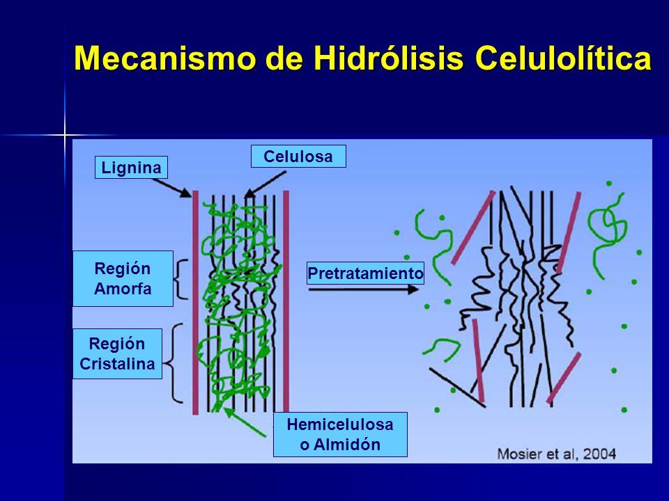 Celulosa Lignina Región Amorfa Región Cristalina Pretratamiento Hemicelulosa o Almidón Mecanismo de Hidrólisis Celulolítica