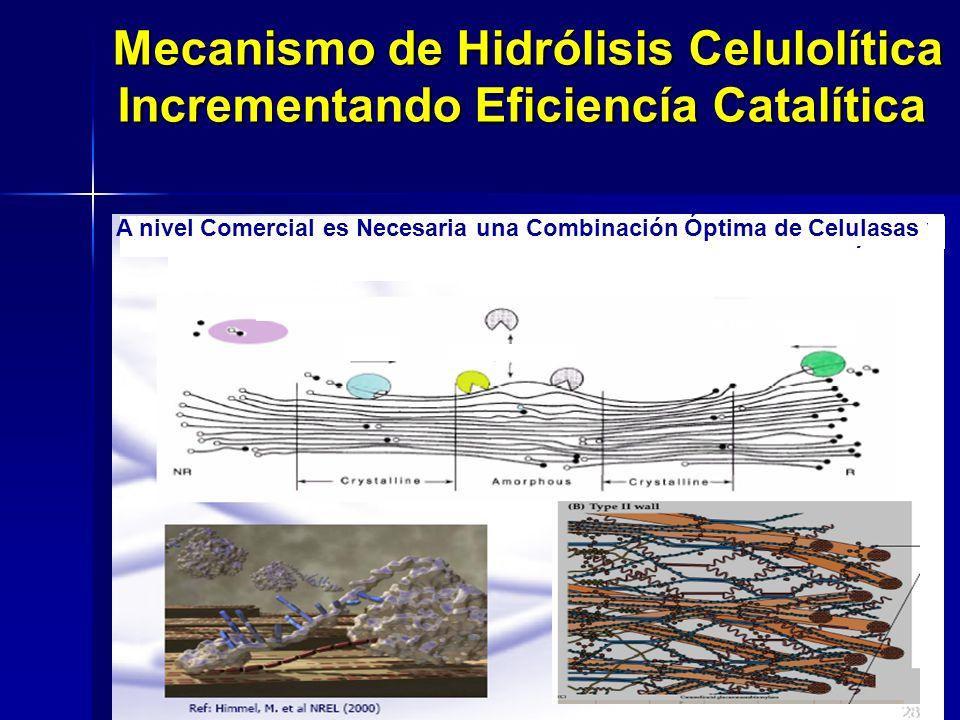 Incrementando Eficiencía Catalítica A nivel Comercial es Necesaria una Combinación Óptima de Celulasas y Hemicelulasas Producidas en el Mismo Sistema