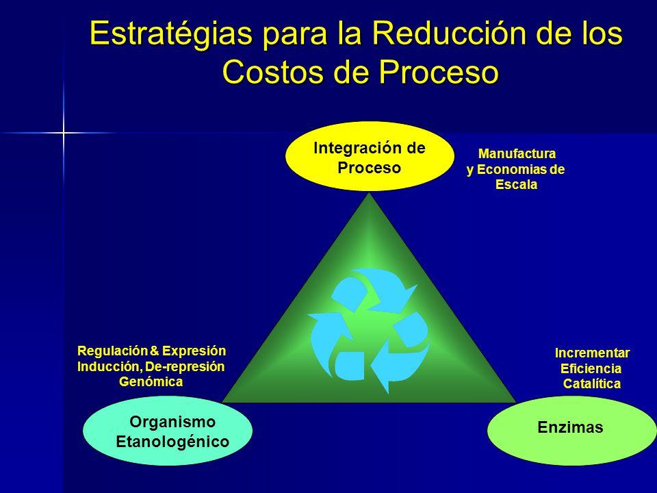 Incrementar Eficiencia Catalítica Enzimas Organismo Etanologénico Integración de Proceso Estratégias para la Reducción de los Costos de Proceso Regula