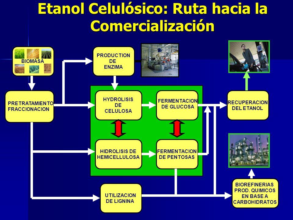 Etanol Celulósico: Ruta hacia la Comercialización BIOMASA HYDROLISIS DE CELULOSA FERMENTACION DE PENTOSAS UTILIZACION DE LIGNINA RECUPERACION DEL ETAN