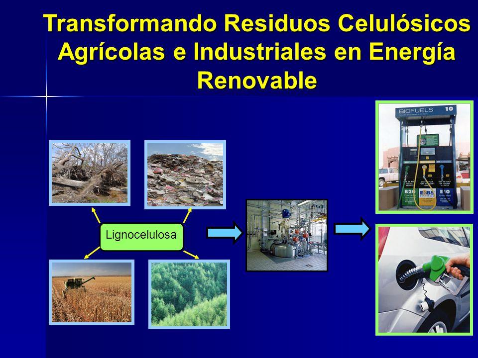 Transformando Residuos Celulósicos Agrícolas e Industriales en Energía Renovable Lignocelulosa