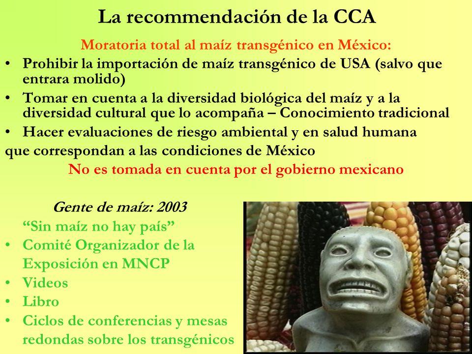 La recommendación de la CCA Moratoria total al maíz transgénico en México: Prohibir la importación de maíz transgénico de USA (salvo que entrara molid