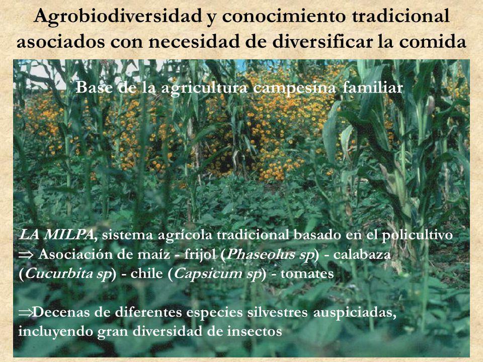 Agrobiodiversidad y conocimiento tradicional asociados con necesidad de diversificar la comida Base de la agricultura campesina familiar LA MILPA, sis