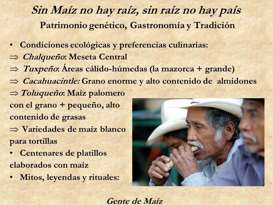 Sin Maíz no hay raíz, sin raíz no hay país Patrimonio genético, Gastronomía y Tradición Condiciones ecológicas y preferencias culinarias: Chalqueño: M