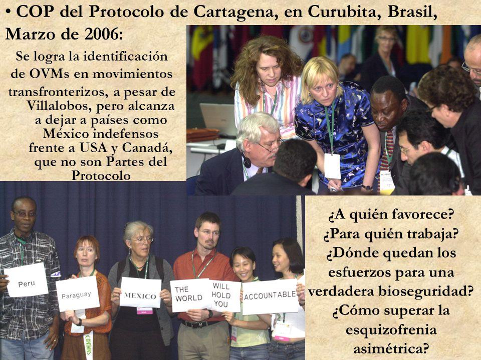 COP del Protocolo de Cartagena, en Curubita, Brasil, Marzo de 2006: Se logra la identificación de OVMs en movimientos transfronterizos, a pesar de Vil