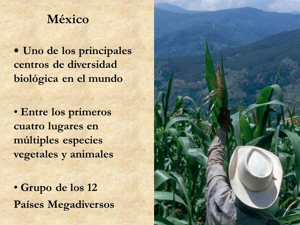 México, centro de origen de la agricultura Uno de los 9 centros de invención de la agricultura en el mundo: 9,000 a 10,000 años