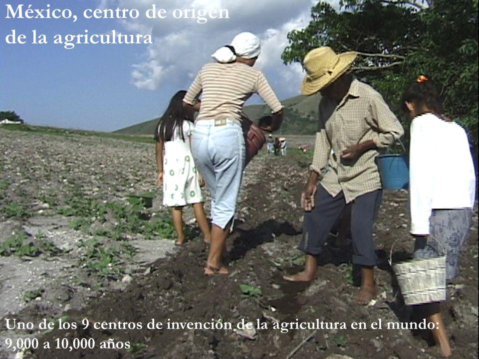 La discusión en diversas partes del mundo en 2005 En Europa: escándalo del maíz MON863 de Monsanto Un juez de Alemania obligó a hacer público un reporte confidencial de Monsanto en el que se informaba de IMPACTOS EN SANGRE Y RIÑONES DE RATAS alimentadas con ese maíz China: Segundo centro de origen contaminado, con semillas de arroz Bt en etapa experimental, que no pasaron por pruebas de seguridad para consumo humano (abril 2005), pero aprobó maíz transgénico de Monsanto Reino Unido: estudios científicos revelan que las variedades transgénicos tienen efectos negativos ¡sobre la biodiversidad de países como Inglaterra.