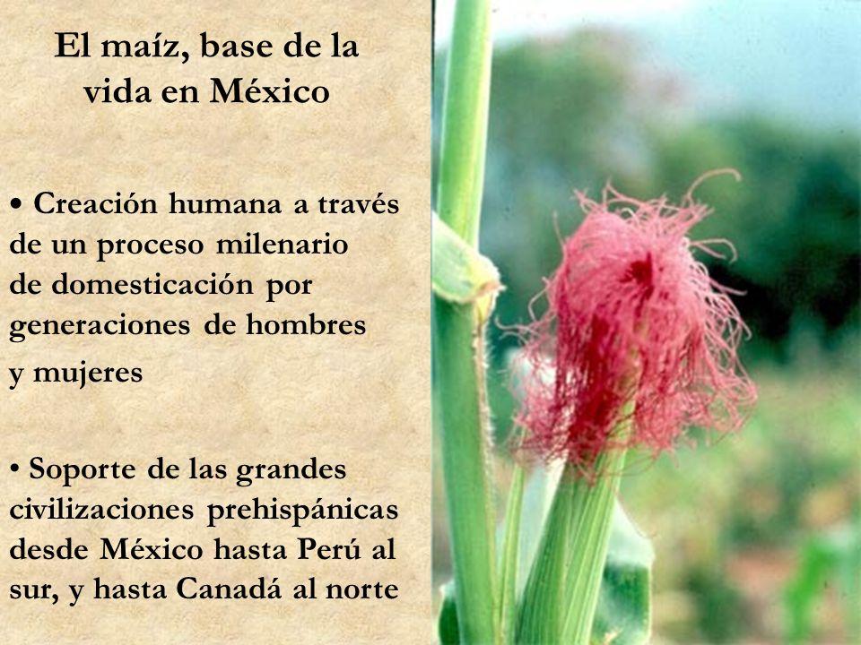 Por una agricultura campesina sustentable, base de la soberanía alimentaria Responsabilidad de la sociedad rural y urbana Comunidades y Organizaciones en Defensa del Maíz En Oaxaca, Guerrero, Tlaxcala, Puebla, Morelos, Chiapas, Michoacán, Chihuahua, Jalisco, etc.