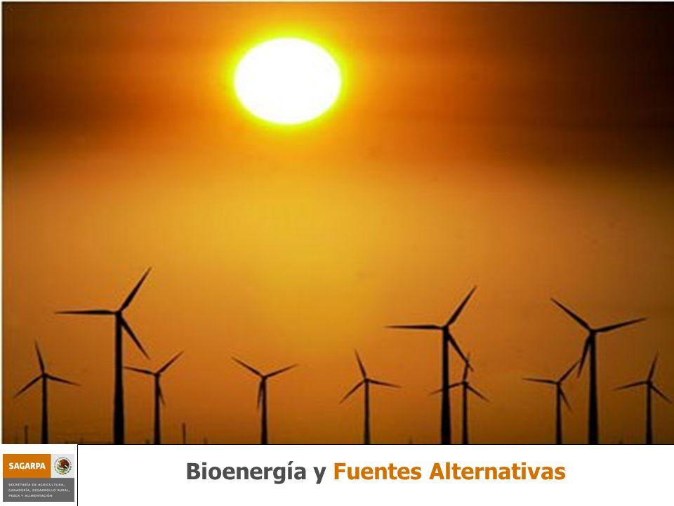 Programa de Sustentabilidad de los Recursos Naturales Componente Bioenergía y Fuentes Alternativas