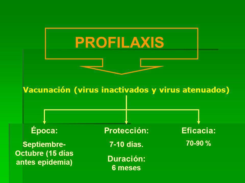 PROFILAXIS Vacunación (virus inactivados y virus atenuados) Época: Septiembre- Octubre (15 días antes epidemia) Protección: 7-10 días.
