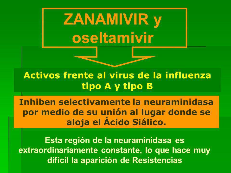 ZANAMIVIR y oseltamivir Inhiben selectivamente la neuraminidasa por medio de su unión al lugar donde se aloja el Ácido Siálico.