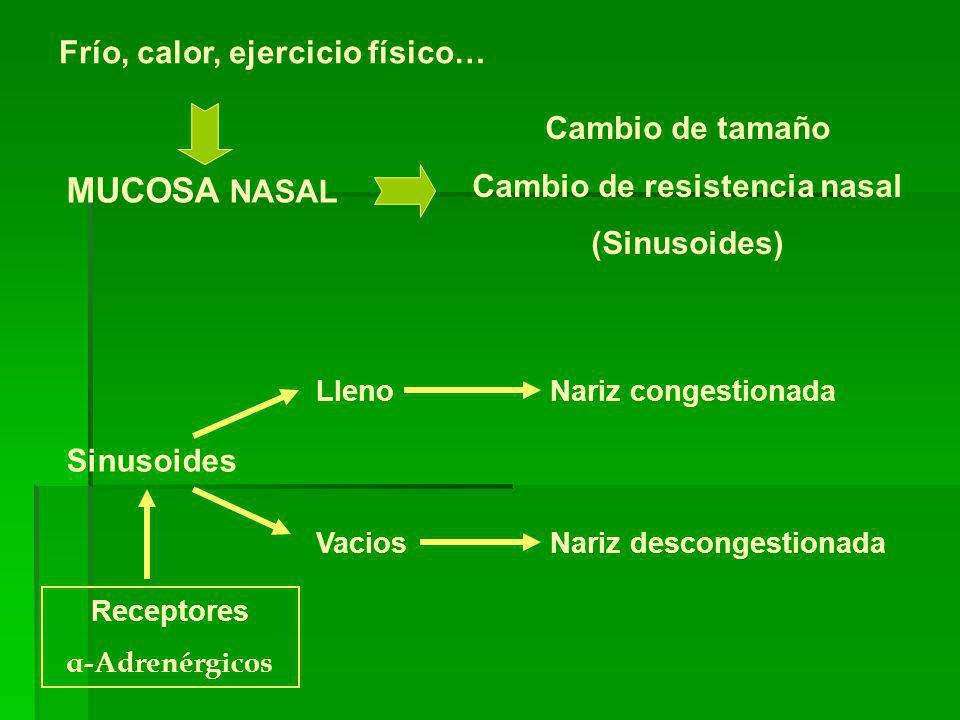 Frío, calor, ejercicio físico… MUCOSA NASAL Cambio de tamaño Cambio de resistencia nasal (Sinusoides) Sinusoides LlenoNariz congestionada VaciosNariz descongestionada Receptores α-Adrenérgicos