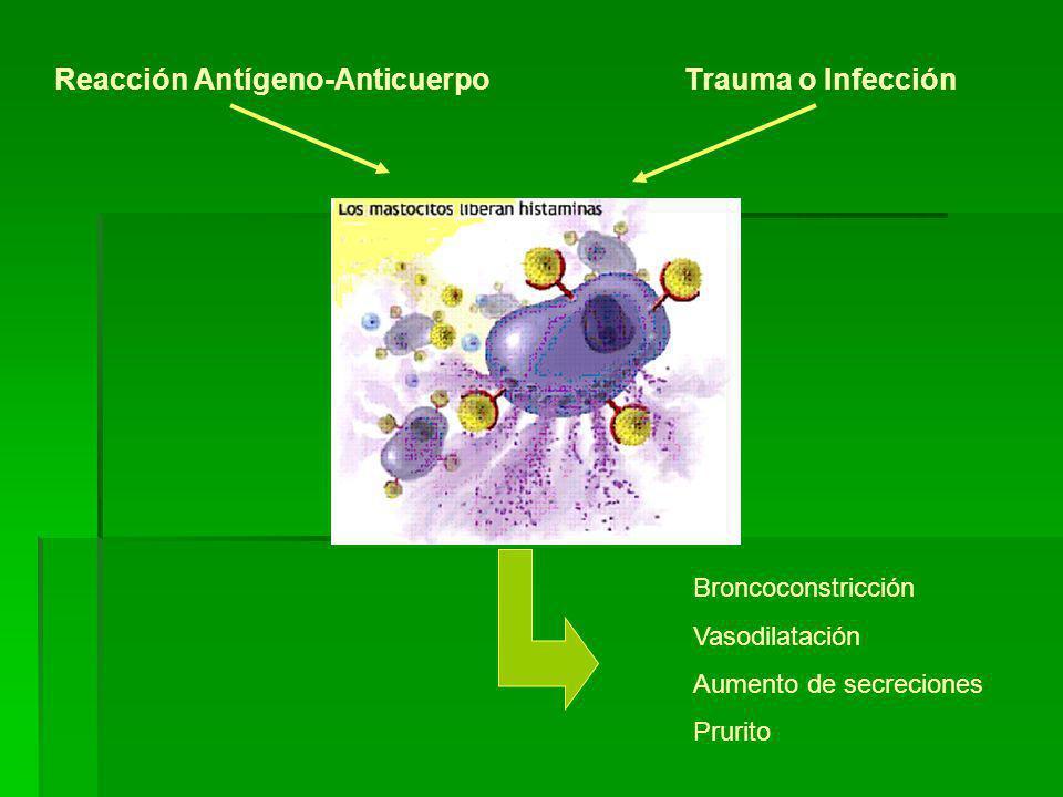 Reacción Antígeno-AnticuerpoTrauma o Infección Broncoconstricción Vasodilatación Aumento de secreciones Prurito