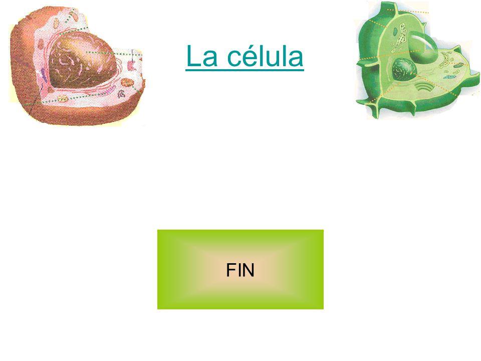 Las células Célula eucariota animal Célula eucariota vegetal