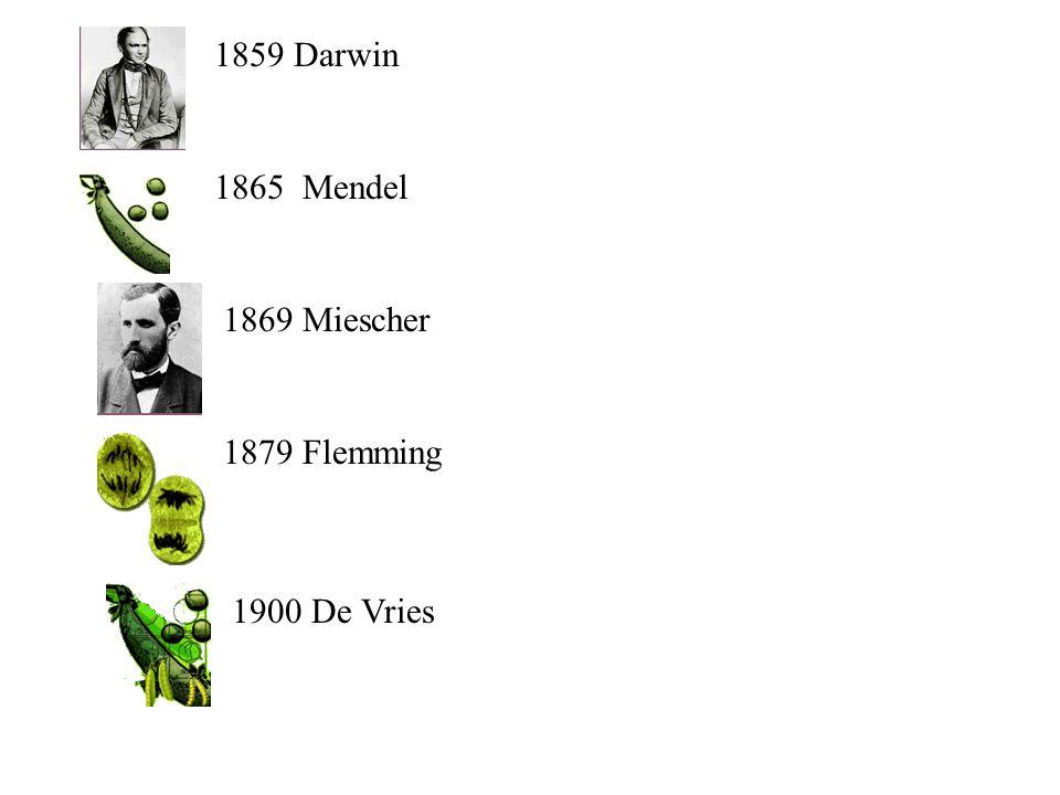 1859 Darwin 1865 Mendel 1869 Miescher 1900 De Vries 1879 Flemming