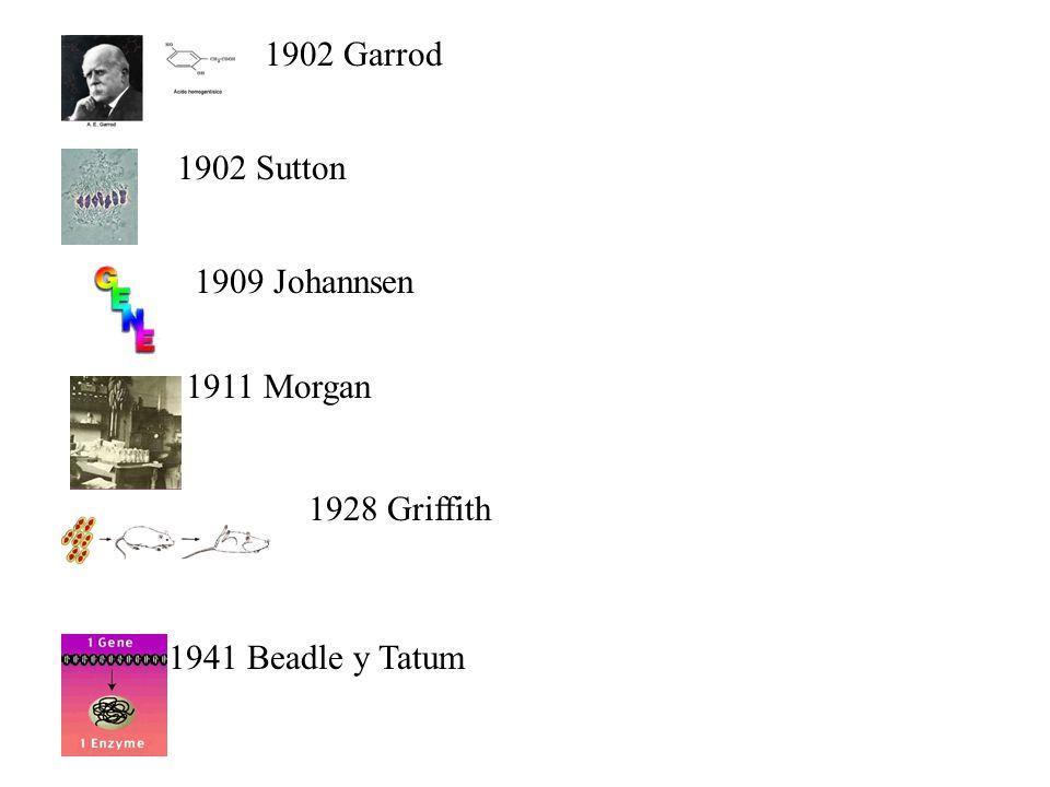 1902 Garrod 1902 Sutton 1909 Johannsen 1911 Morgan 1941 Beadle y Tatum 1928 Griffith