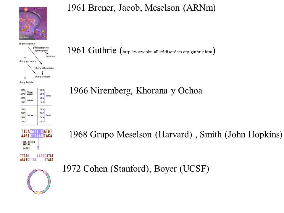 1961 Brener, Jacob, Meselson (ARNm) 1961 Guthrie ( http://www.pku-allieddisorders.org/guthrie.htm ) 1966 Niremberg, Khorana y Ochoa 1968 Grupo Meselson (Harvard), Smith (John Hopkins) 1972 Cohen (Stanford), Boyer (UCSF)
