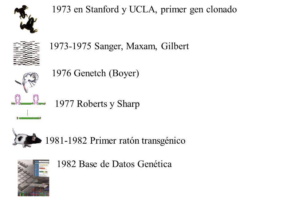 1973 en Stanford y UCLA, primer gen clonado 1973-1975 Sanger, Maxam, Gilbert 1976 Genetch (Boyer) 1977 Roberts y Sharp 1981-1982 Primer ratón transgénico 1982 Base de Datos Genética