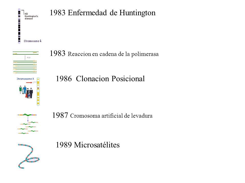 1983 Enfermedad de Huntington 1983 Reaccion en cadena de la polimerasa 1986 Clonacion Posicional 1987 Cromosoma artificial de levadura 1989 Microsatélites