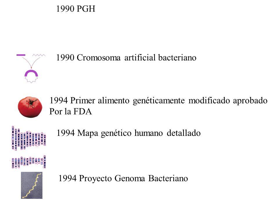 1990 PGH 1990 Cromosoma artificial bacteriano 1994 Primer alimento genéticamente modificado aprobado Por la FDA 1994 Mapa genético humano detallado 1994 Proyecto Genoma Bacteriano