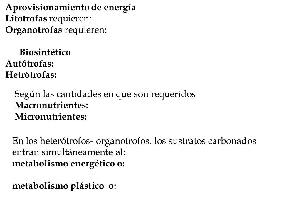 Aprovisionamiento de energía Litotrofas requieren:.