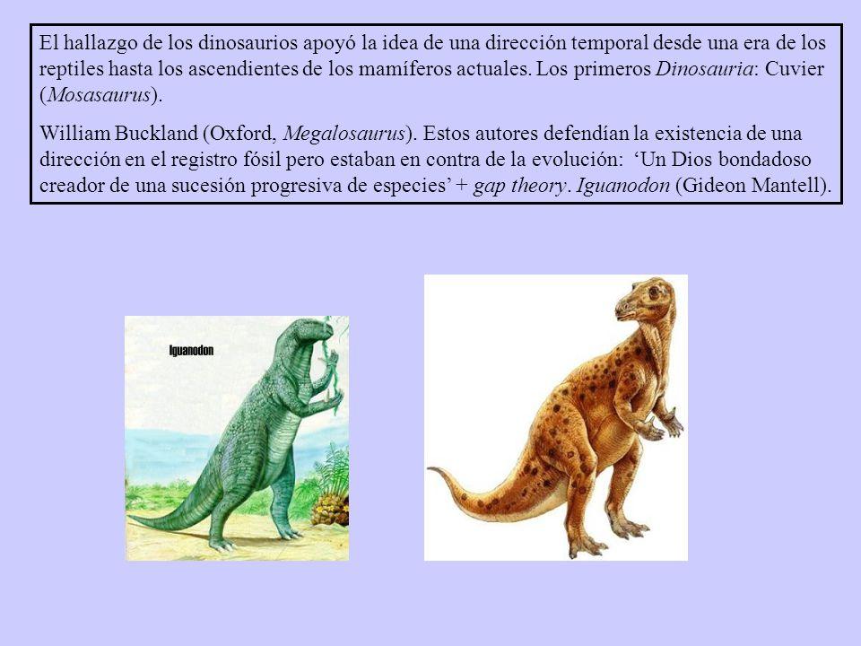 El hallazgo de los dinosaurios apoyó la idea de una dirección temporal desde una era de los reptiles hasta los ascendientes de los mamíferos actuales.