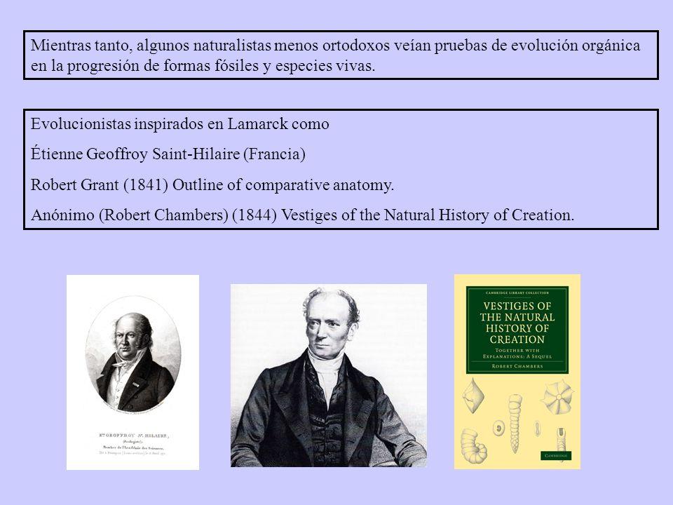 Evolucionistas inspirados en Lamarck como Étienne Geoffroy Saint-Hilaire (Francia) Robert Grant (1841) Outline of comparative anatomy.