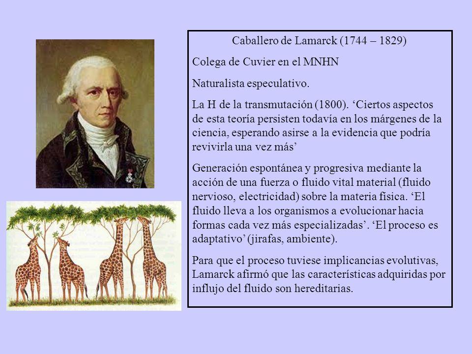 Caballero de Lamarck (1744 – 1829) Colega de Cuvier en el MNHN Naturalista especulativo.
