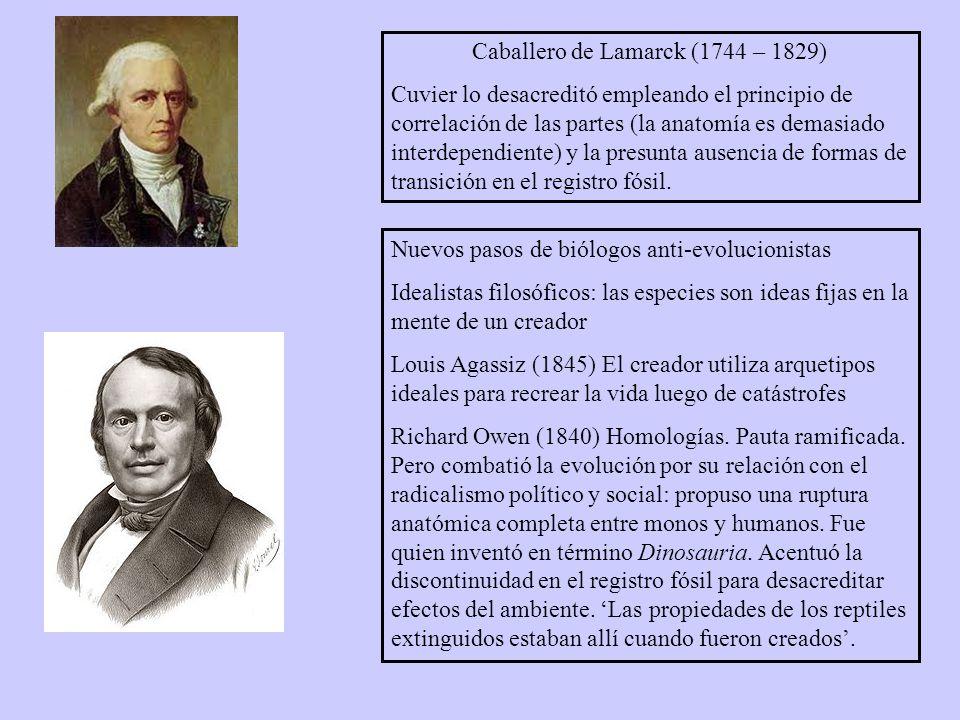 Caballero de Lamarck (1744 – 1829) Cuvier lo desacreditó empleando el principio de correlación de las partes (la anatomía es demasiado interdependiente) y la presunta ausencia de formas de transición en el registro fósil.