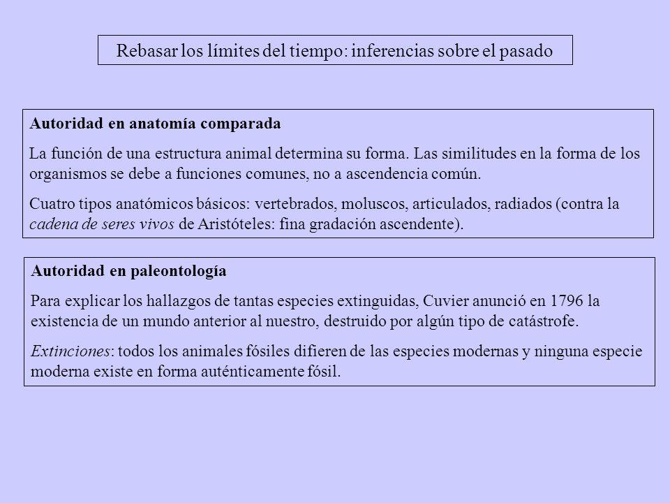 Autoridad en anatomía comparada La función de una estructura animal determina su forma.