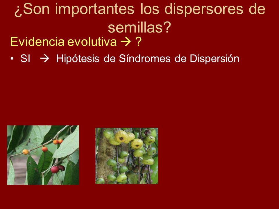 Evidencia evolutiva ? SI Hipótesis de Síndromes de Dispersión ¿Son importantes los dispersores de semillas?