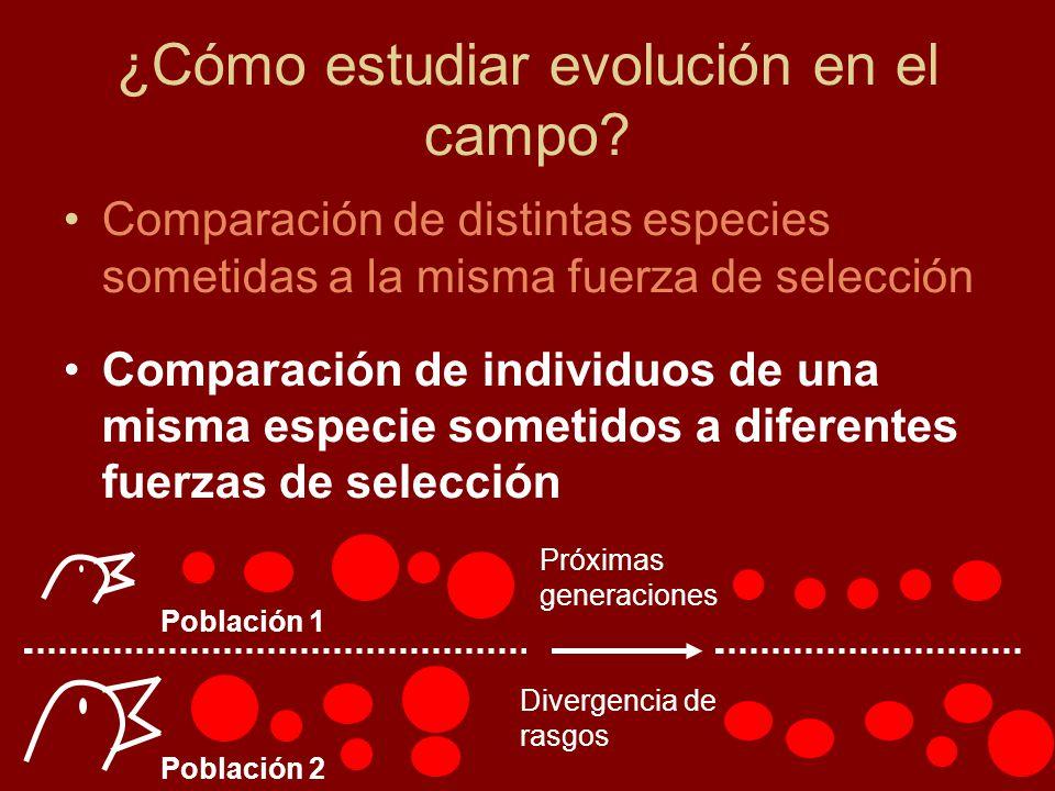 ¿Cómo estudiar evolución en el campo.