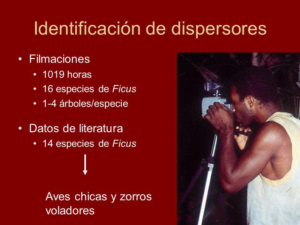 Identificación de dispersores Filmaciones 1019 horas 16 especies de Ficus 1-4 árboles/especie Datos de literatura 14 especies de Ficus Aves chicas y z