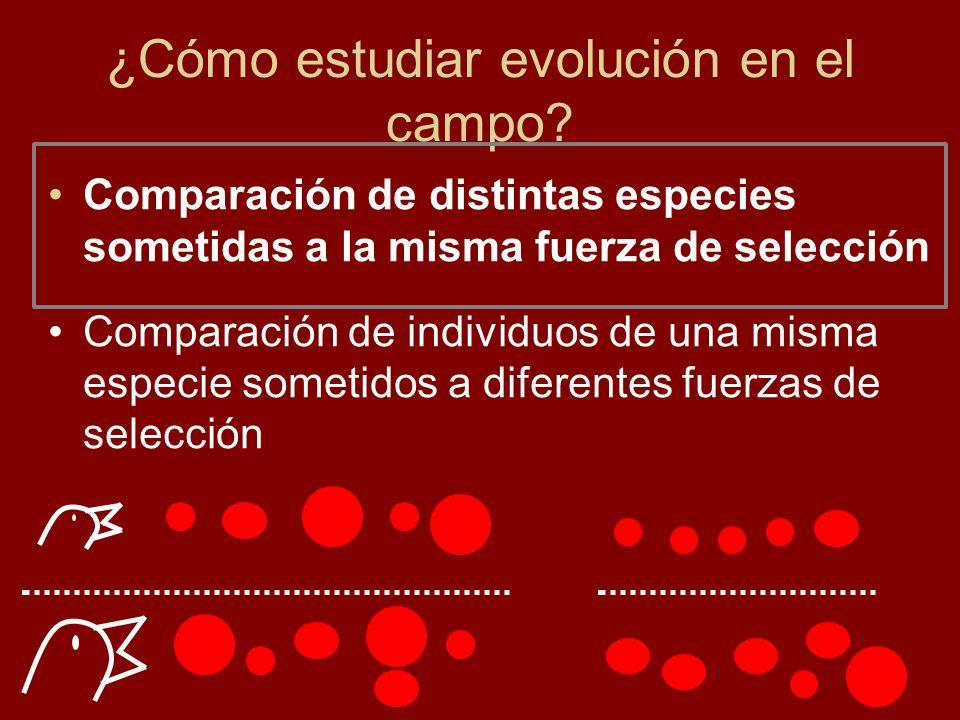 ¿Cómo estudiar evolución en el campo? Comparación de distintas especies sometidas a la misma fuerza de selección Comparación de individuos de una mism