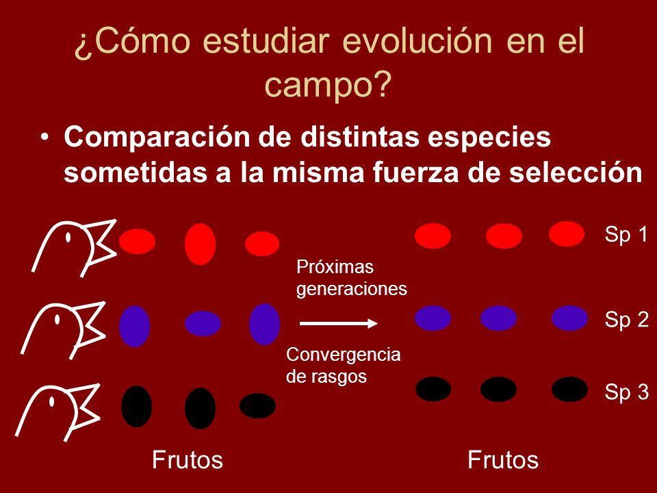 ¿Cómo estudiar evolución en el campo? Comparación de distintas especies sometidas a la misma fuerza de selección Sp 1 Sp 2 Sp 3 Próximas generaciones