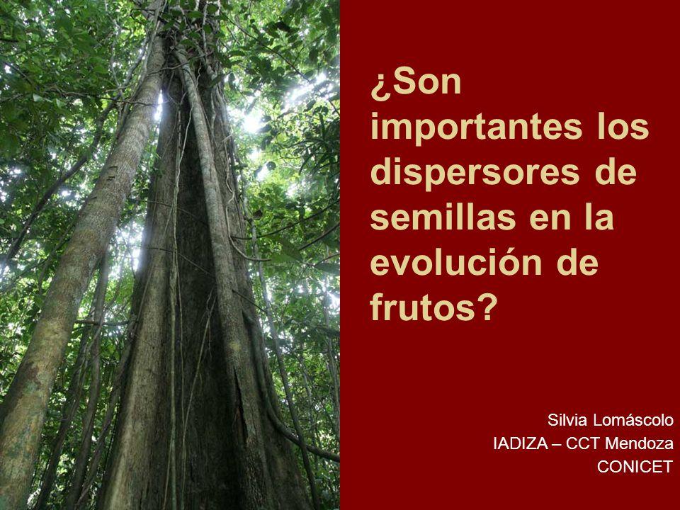 Preguntas Comparación interespecífica ¿Existen los síndromes de dispersión.