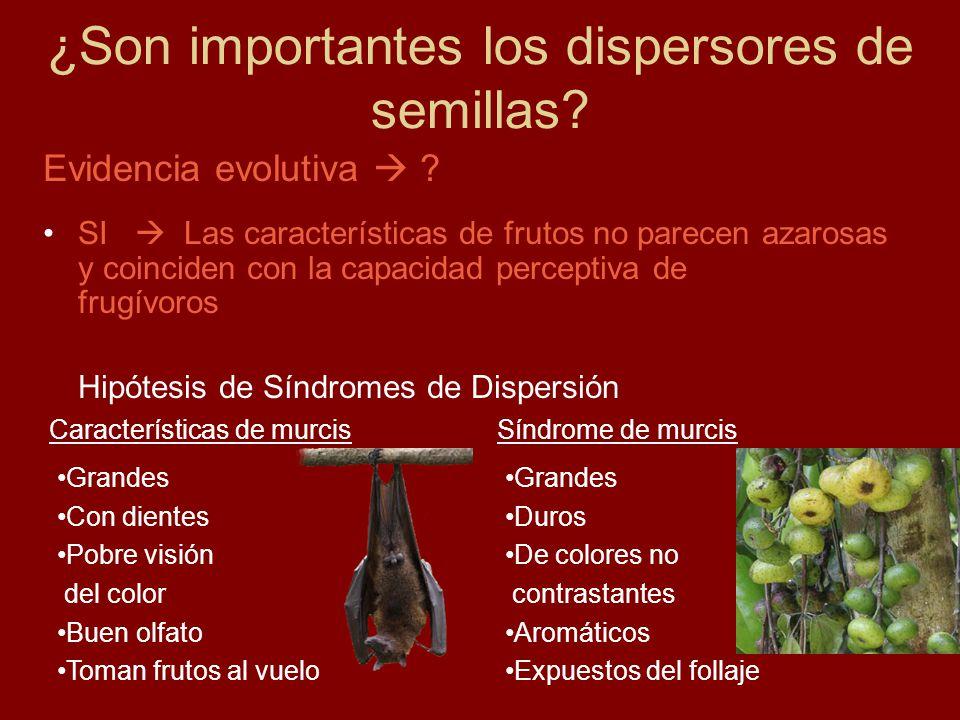 Grandes Duros De colores no contrastantes Aromáticos Expuestos del follaje ¿Son importantes los dispersores de semillas.
