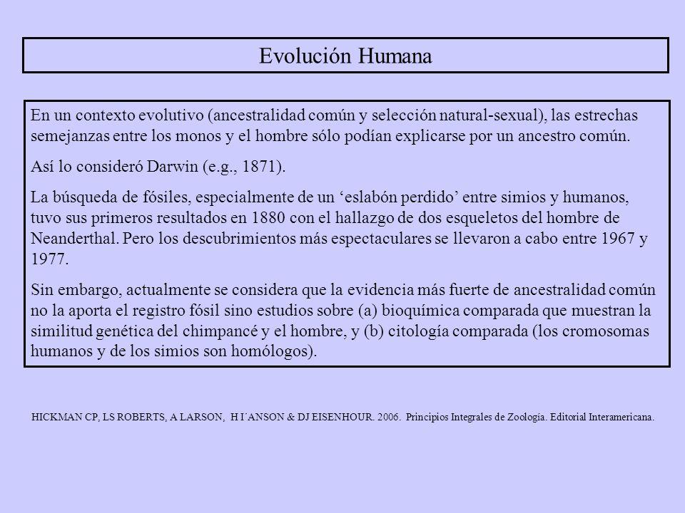 Evolución Humana En un contexto evolutivo (ancestralidad común y selección natural-sexual), las estrechas semejanzas entre los monos y el hombre sólo