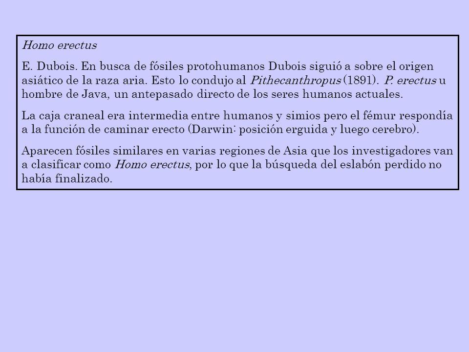 Homo erectus E. Dubois. En busca de fósiles protohumanos Dubois siguió a sobre el origen asiático de la raza aria. Esto lo condujo al Pithecanthropus