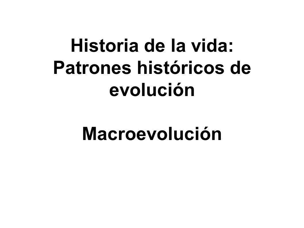 Historia de la vida: Patrones históricos de evolución Macroevolución