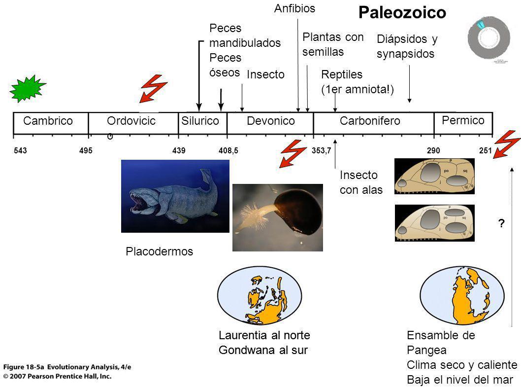 Paleozoico Laurentia al norte Gondwana al sur CambricoOrdovicic o SiluricoDevonicoCarbonifero Permico Ensamble de Pangea Clima seco y caliente Baja el