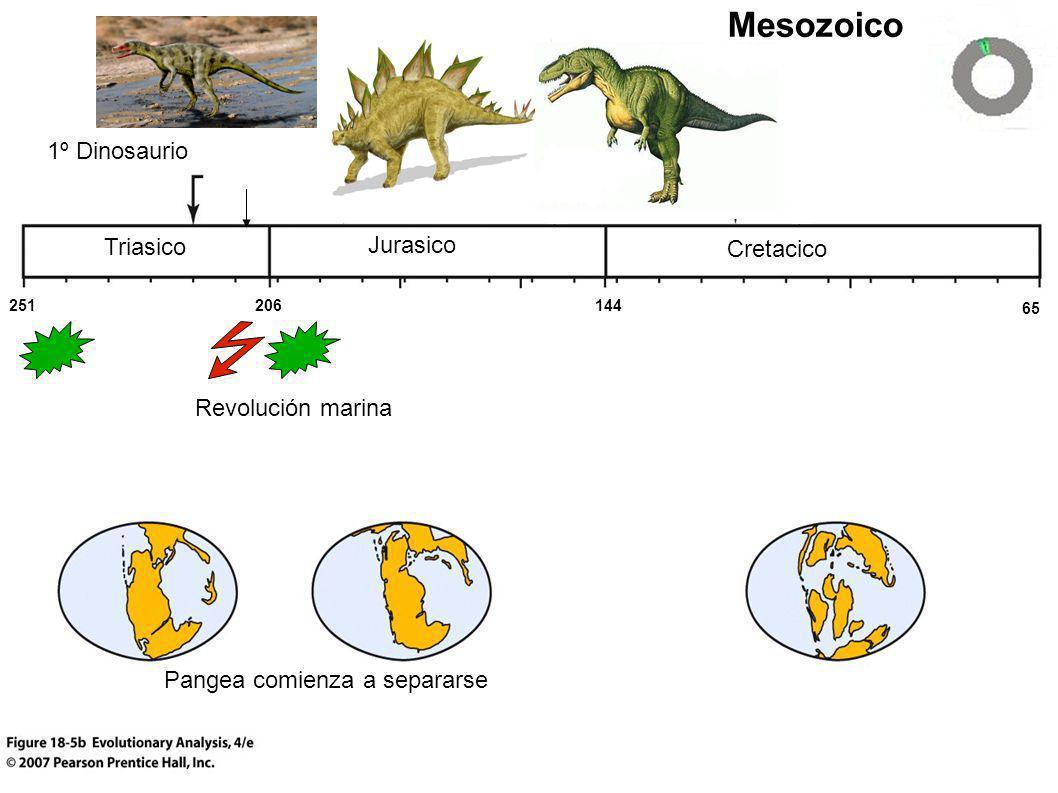Triasico Cretacico Jurasico Mesozoico Pangea comienza a separarse 1º Dinosaurio 251 65 144206 Revolución marina