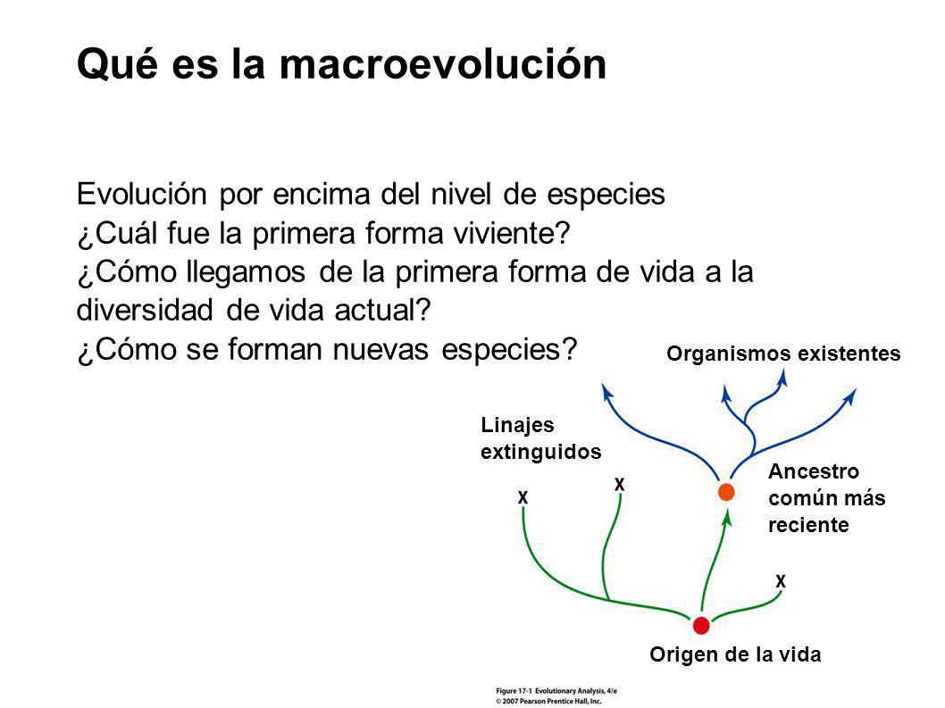 Qué es la macroevolución Origen de la vida Organismos existentes Ancestro común más reciente Linajes extinguidos Evolución por encima del nivel de esp
