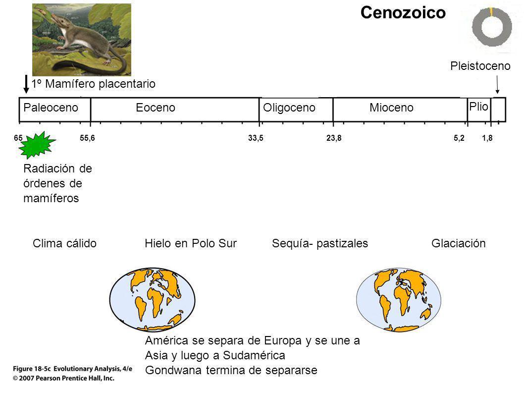 Cenozoico 651,85,223,833,555,6 Pleistoceno MiocenoOligocenoEocenoPaleoceno Plio Radiación de órdenes de mamíferos Clima cálidoHielo en Polo Sur Sequía