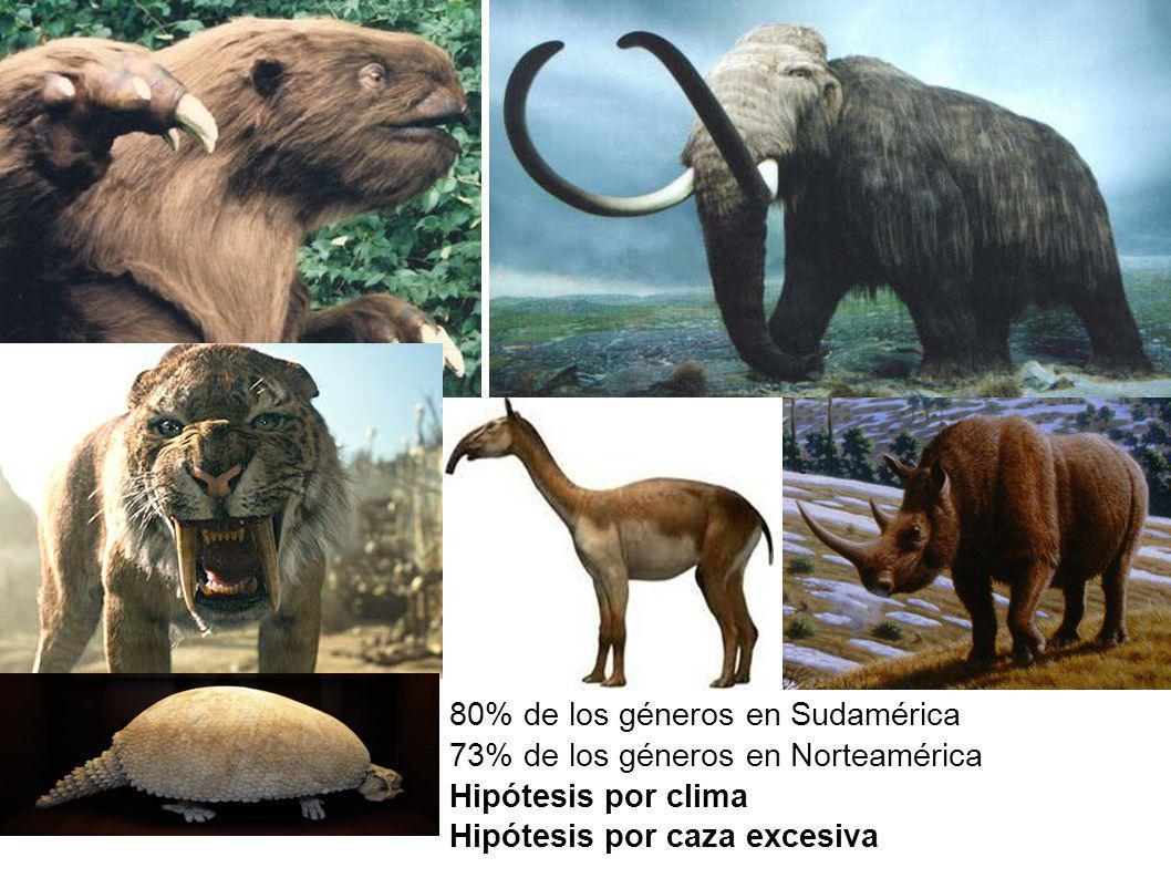 80% de los géneros en Sudamérica 73% de los géneros en Norteamérica Hipótesis por clima Hipótesis por caza excesiva