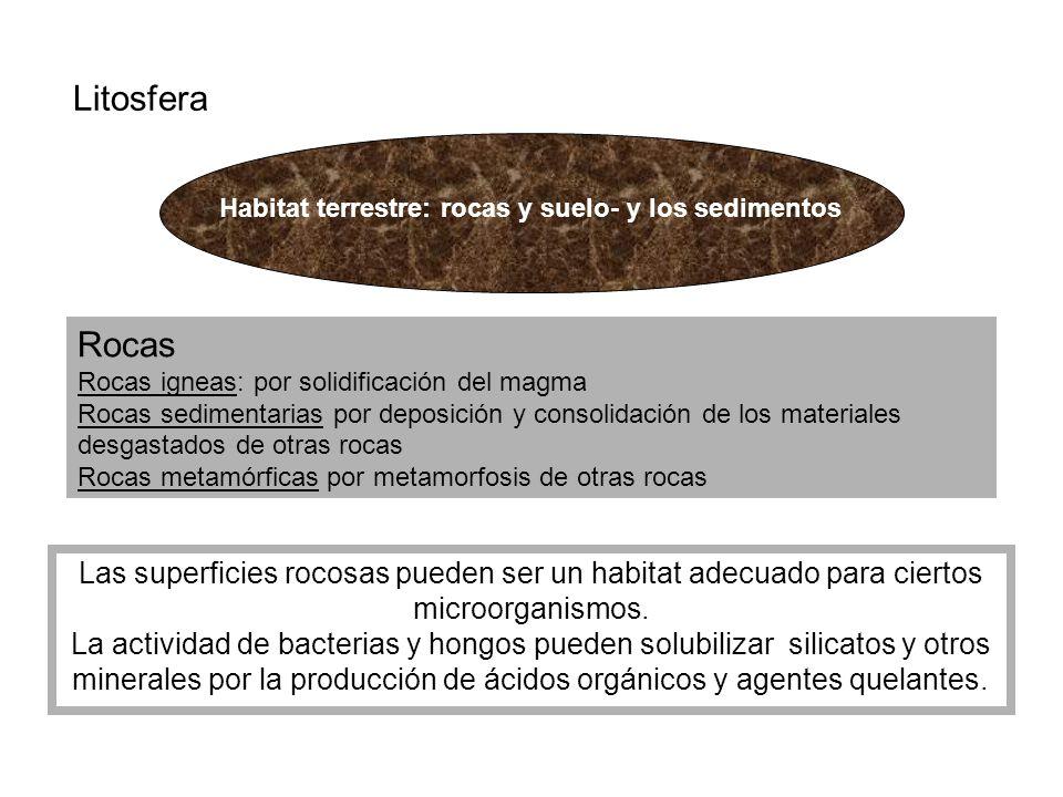 Habitat terrestre: rocas y suelo- y los sedimentos Litosfera Rocas Rocas igneas: por solidificación del magma Rocas sedimentarias por deposición y con