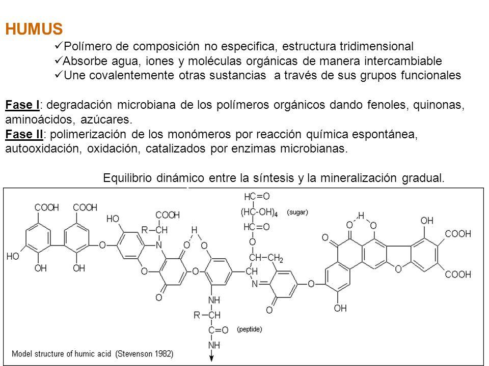 HUMUS Polímero de composición no especifica, estructura tridimensional Absorbe agua, iones y moléculas orgánicas de manera intercambiable Une covalent